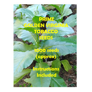 Tobacco Seed 1000pk GT012
